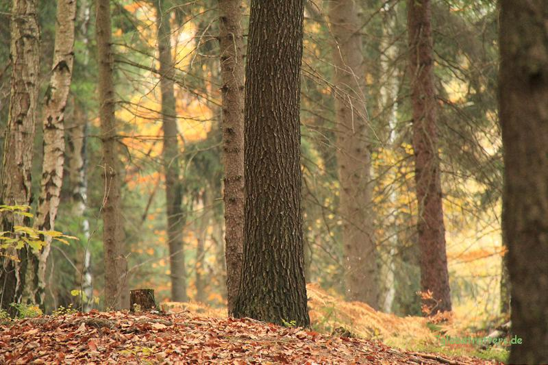 Schöner Herbstwald in der Nähe der Herkulessäule Bielatal