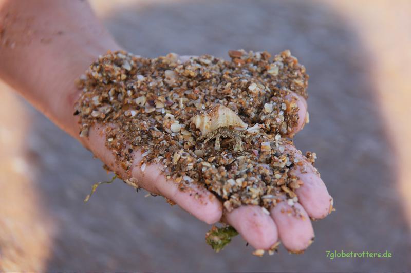 Baby-Einsiedlerkrebs und Muschelsand der Arabat-Nehrung