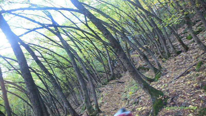 Die schiefen Wälder oberhalb von Andrian