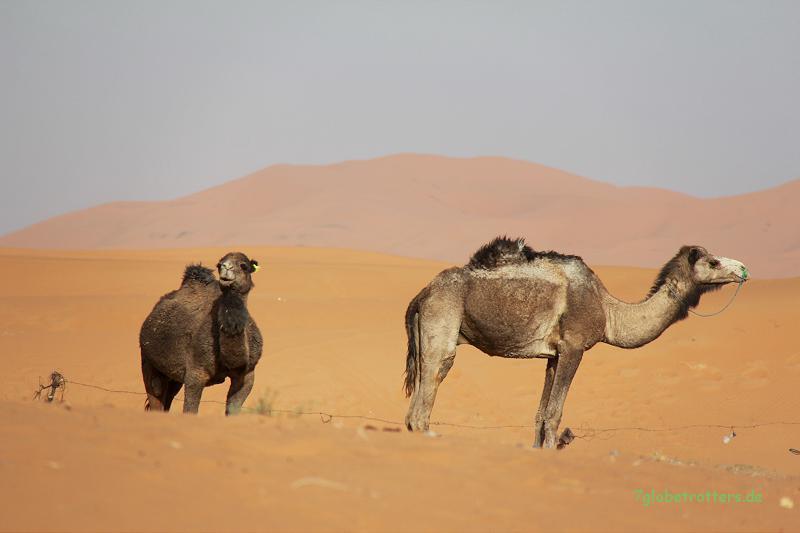 Touristentransportmittel in Merzouga