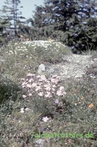 1988-Osteuropa-045 (4)