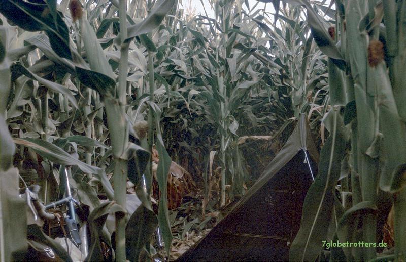 Ein Bett im Maisfeld...