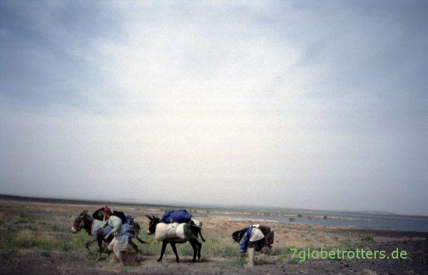 Esel statt Flamingos im Dayet Sri