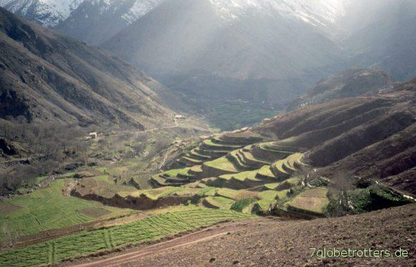Terassenfelder im Tal des Oued Rheraya