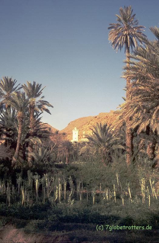 Die Oase von Tinerhir, Marokko
