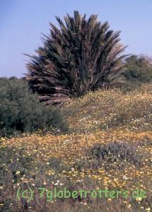 1996 Marokko (329)b
