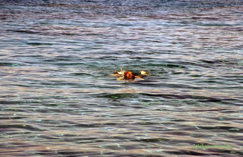 Schnorcheln im Roten Meer: Wo ist mein Tüddeldraht?