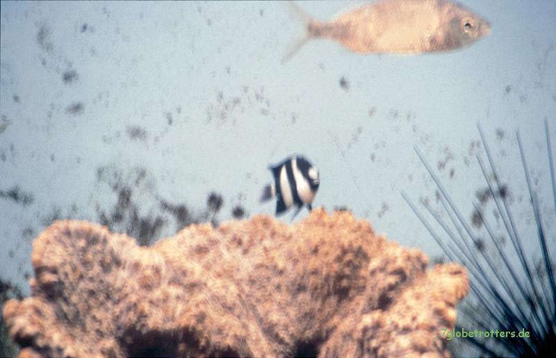 Unscharfer Fisch hinter Glas (also nicht beim Schnorcheln fotografiert)
