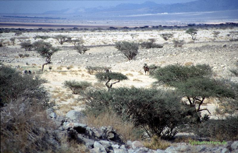 1997 Zum Roten Meer (155)