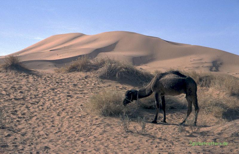 2000 Marokko (101)