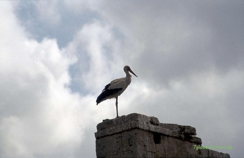 Storch in Rabat