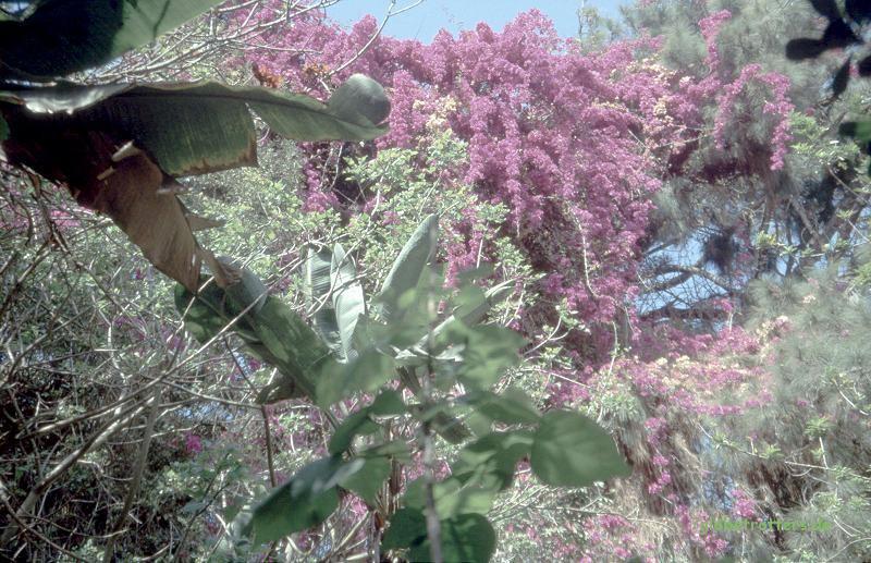 Blühendes Leben in der Totenstadt von Rabat