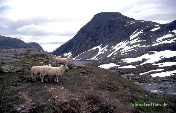 Der Dalsnibba am Geirangerfjord