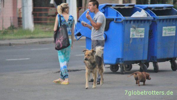 Überall gut organisierte Straßenhundengangs