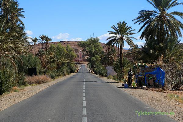Palmenhain in Marokko, südlich des Atlas