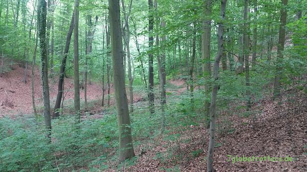 Mai im Stadtwald