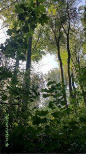 Sonnenaufgang im Regenwald