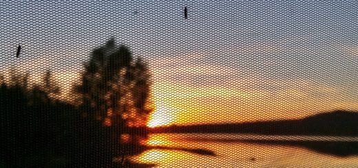 Test des Mückennetzes im Aufstelldach mit Polarkreis-Mücken