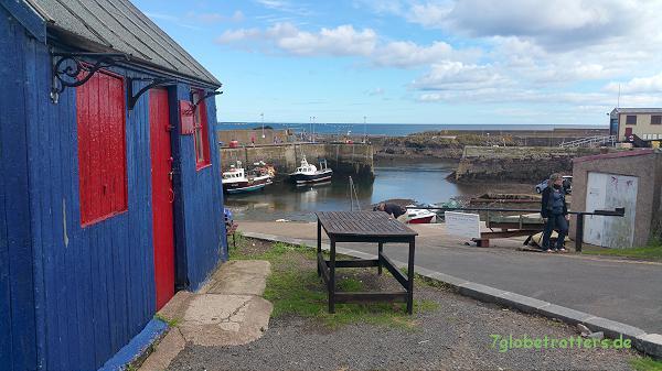 Der Hafen von St. Abbs / Schottland