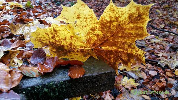 Herbst auf den Treppenanlagen im Schulwald