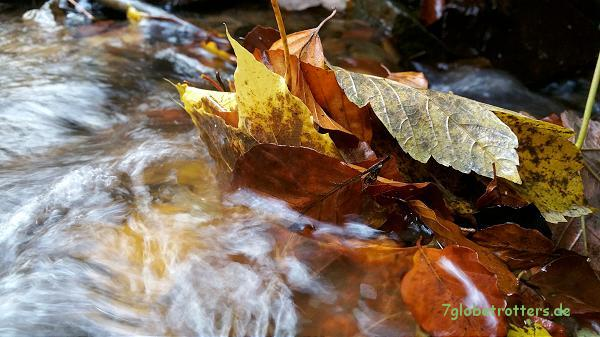 Und natürlich muss Papa wieder trödeln und Blätter im Wasser fotografieren