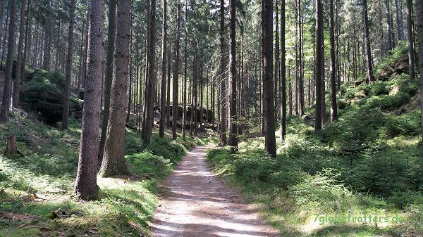 Hinterer Heideweg: Aufstieg zu den Affensteinen