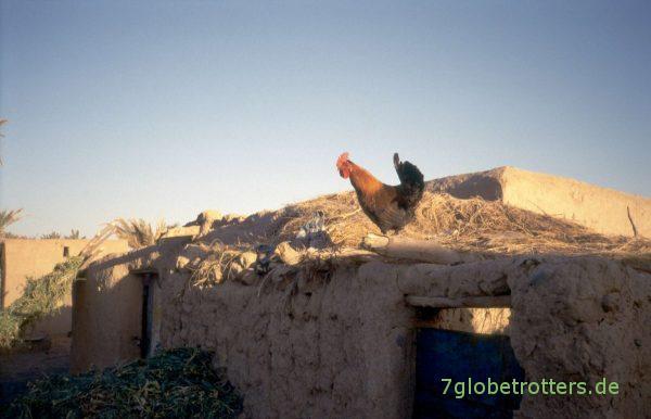 Als Merzouga noch ein Dorf war: Der Hahn von Merzouga