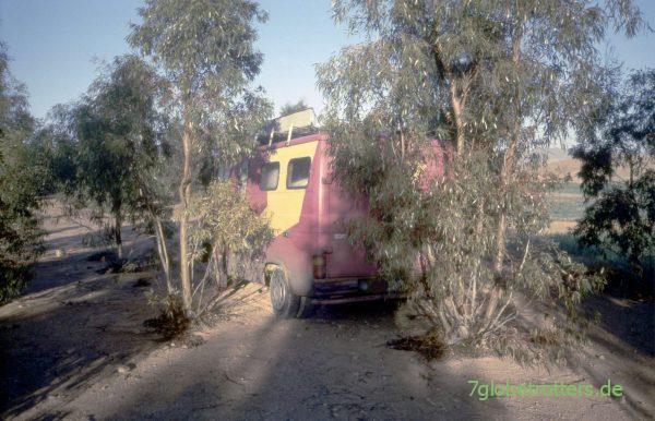 Freier Stellplatz unter Eukalyptusbäumen bei Taourirt