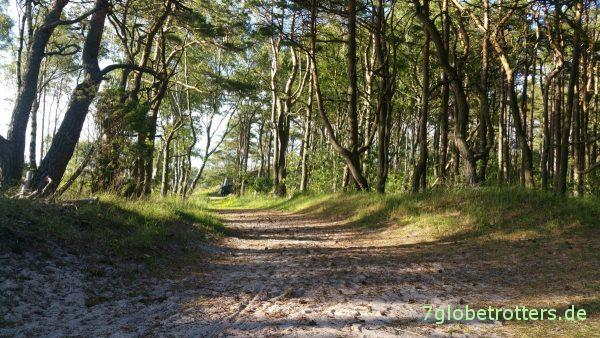 Weg durch den Strandwald