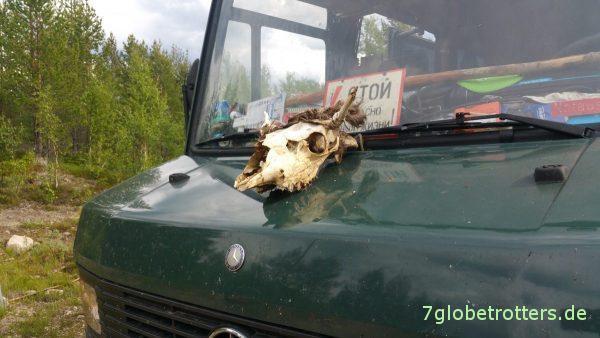 Das erste tote Rentier
