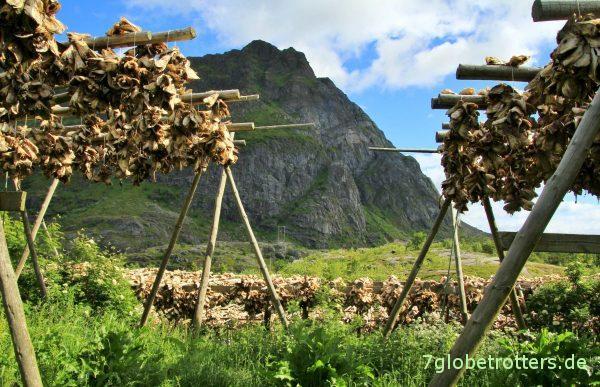 Typisch für die Lofoten: Stockfischgestelle in Å