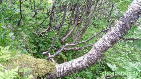 Bewaldeter Abhang am Andstabben