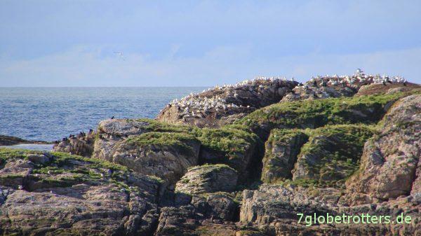 Die erste Vogelinsel auf Andøya
