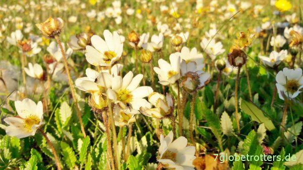 [22:30] Noch voller Betrieb auf der Polartags-Blumenwiese