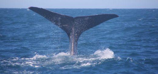 Wale beobachten vor Norwegens Nordküste