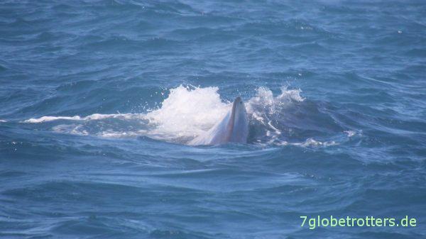 U-Boot-mäßiges Wal-Geblubber