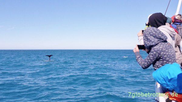 Walbeobachtung aus der Handyperspektive