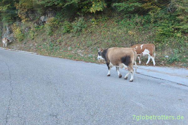 Bosnien-Herzegowina: Jeder hat eine Kuh