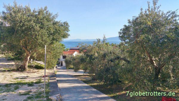 Überall Olivenbäume auf dem Campingplatz Podaca