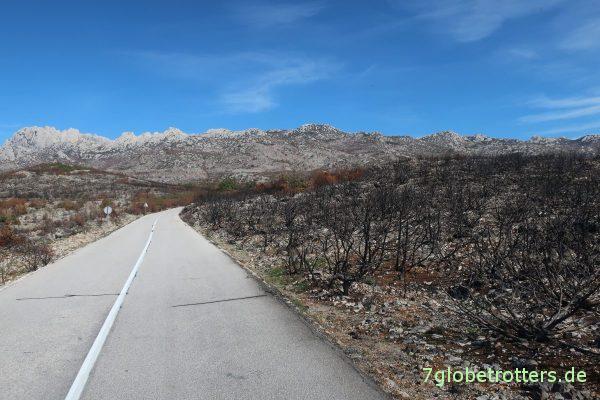 Verbrannte Wälder rund um den Nugget Tsil