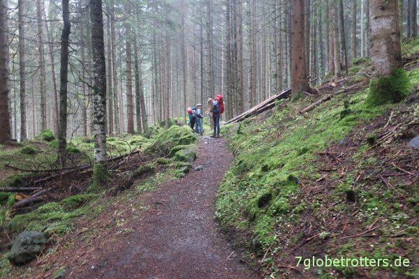 Im Hauensteiner Wald