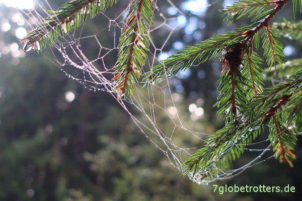 Spinnennetz nach dem regen
