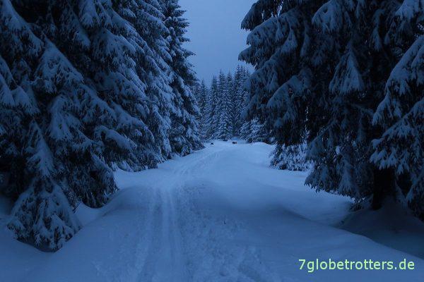 Oh, du dunkler Winterwald