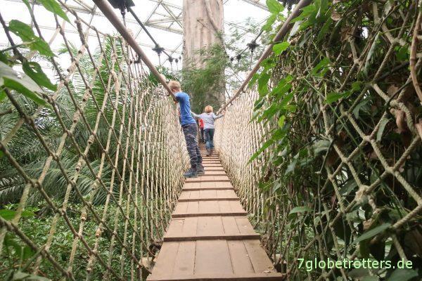 Hängebrücke im Gondwanaland im Zoo Leipzig
