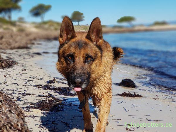 Der angeblich schönste Strand von Sithonia