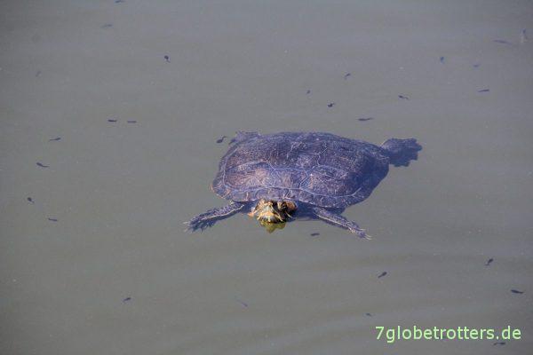 Schildkrötensee auf Kassandra