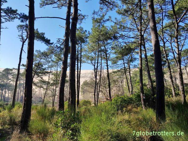 Höchste Sanddüne Europas, Große Düne von Pilat, Arcachon, Mautfrei durch Frankreich, Bordeaux - Angoulême