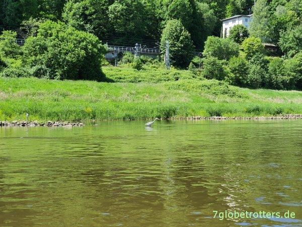 Paddeln durch die Sächsische Schweiz: Elbe Schöna-Königstein-Pirna im Grabner Riverstar und Gumotex Seawave