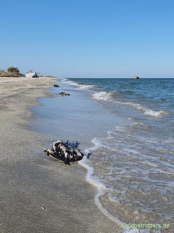 Viele tote Kormorane am Schwarzen Meer in Rumänien