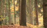 ᐅ Sächsische Schweiz: Kleine Klettertour zur Herkulessäule im wilden Bielatal